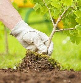 Услуга посадки растений
