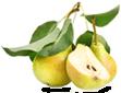 Саженцы груши