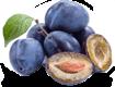 plodovie_3