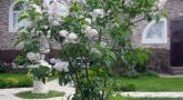 красавица москвы