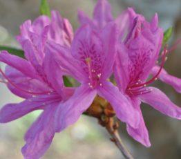 орхид2