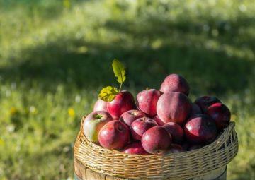 посадка яблони саженцем инструкции