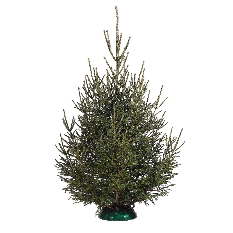 Ель-новогодняя-срезанная-150-200-см